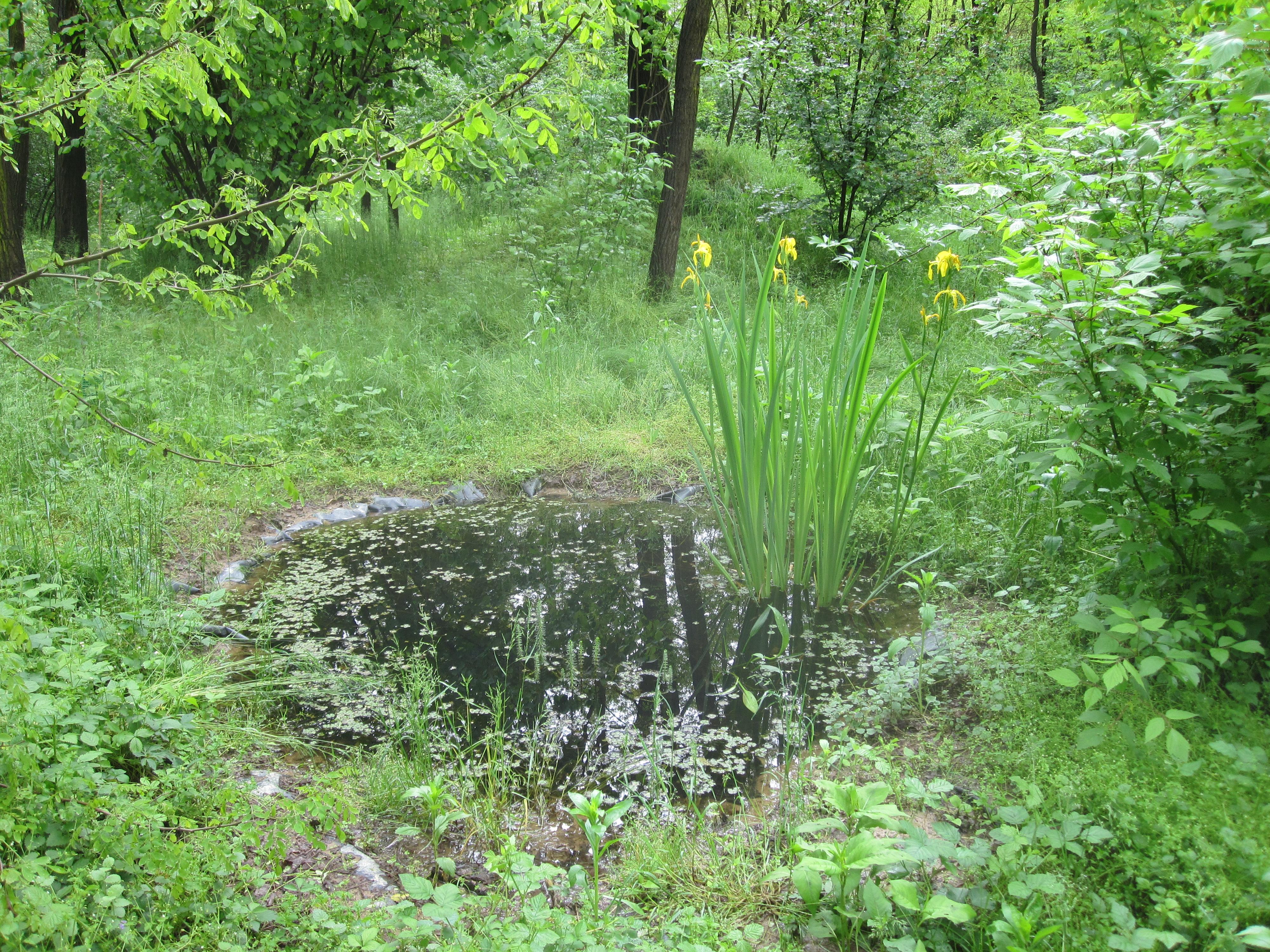 Stagni e barriere per la biodiversit for Vasca per stagno