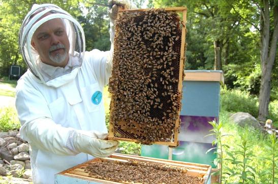 beekeeper-682944_960_720